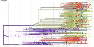 新型コロナウイルス ゲノム